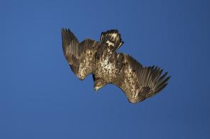 Seeadler 2014