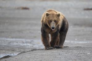 Bilder Fotoreise Alaska 2016