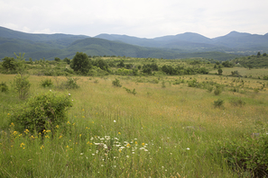 Heckenlandschaft bei Bratsigovo