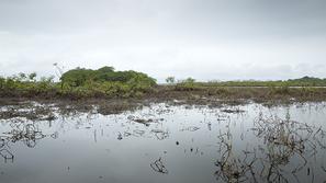 Caño Negro Feuchtgebiet