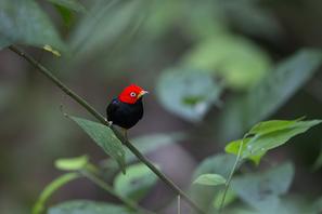 Fotoreise Costa Rica 2016