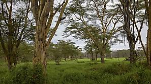 Kenia 2021 Ausschreibung