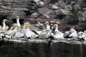 Vogelbilder